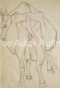 Boceto para vaca espantándose las moscas, 1950